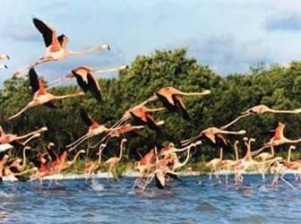 Parque Nacional Celestún