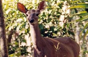 Fauna silvestre en Celestún