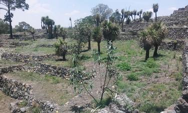 Vista de naturaleza sobre la zona arqueologica de cantona