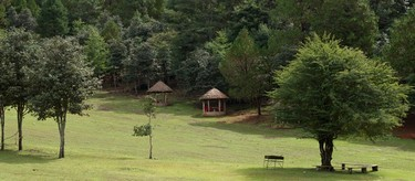 Vista de la vegetación en El Arcotete