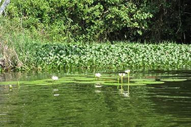 Flora y fauna de la laguna en catemaco