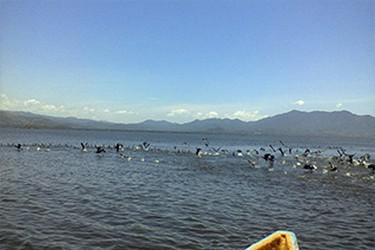 Vista de la laguna con aves