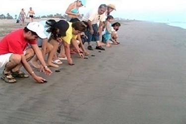 Liberando tortugas en la playa