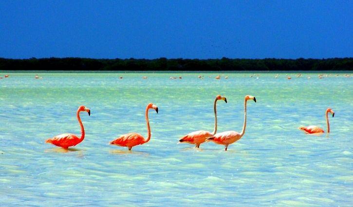 Aves de color rosa