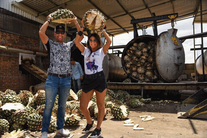 Tourists holding the agave to put the oven