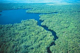 Vista áerea de los pantanos de Centla en Tabasco