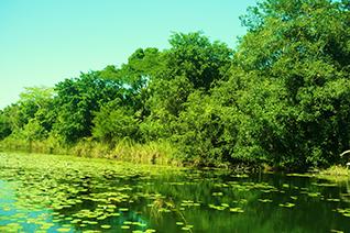 Área natural protegida en Campeche