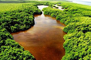 Vista aérea de Los Petenes