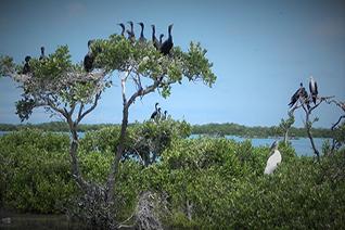 Vista de aves en la isla pájaros en Campeche