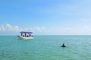Delfines en el recorrido en  embarcación