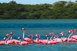 Vista de ejemplares de flamencos rosados