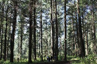 Vista del bosque templado