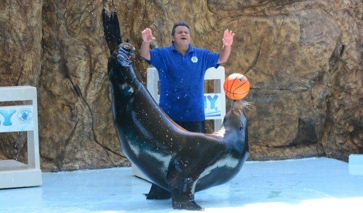 Show con leones marinos