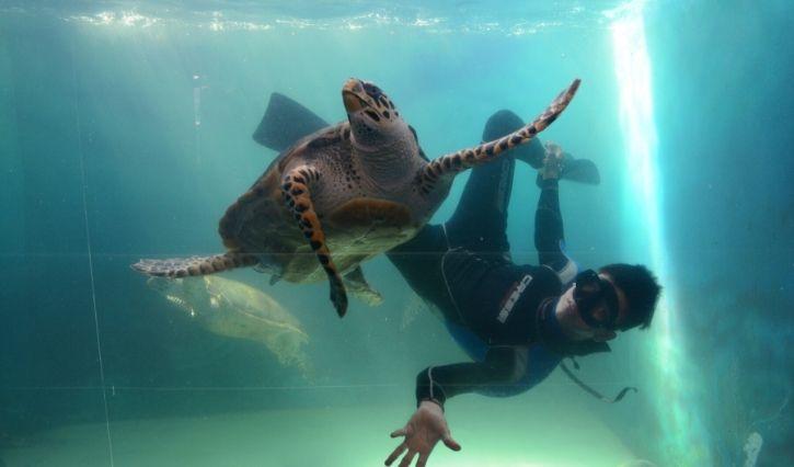Visita a las torturgas marinas en el acuario